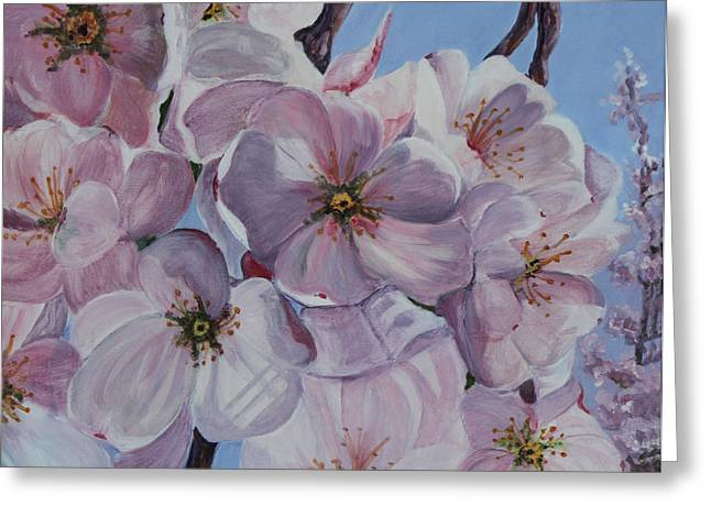 Dc Cherry Blossoms Greeting Card