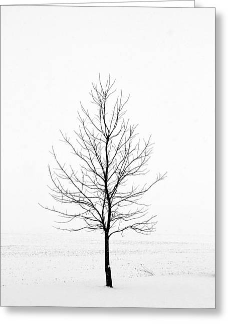 Dead Of Winter Greeting Card by Doug Hockman Photography