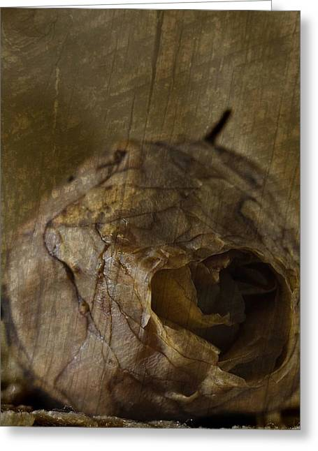 Greeting Card featuring the photograph Dead Rosebud by Steve Purnell