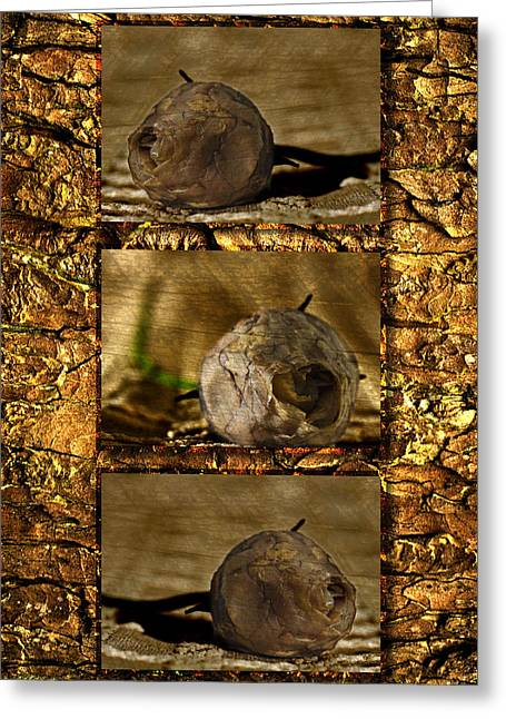 Greeting Card featuring the photograph Dead Rosebud Triptych by Steve Purnell