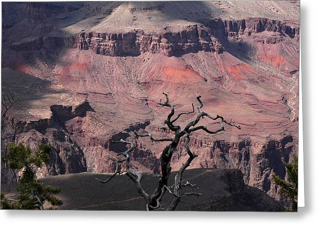 Dead Tree At The Canyon Greeting Card