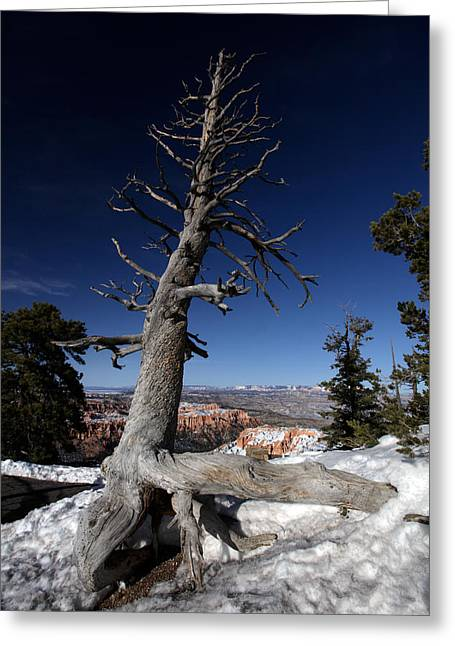 Greeting Card featuring the photograph Dead Tree Over Bryce Canyon by Karen Lee Ensley