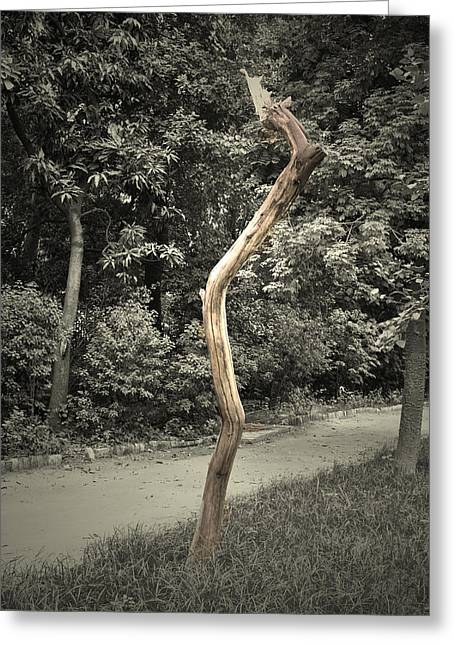 Man Greeting Cards - Dead tree Greeting Card by Sumit Mehndiratta
