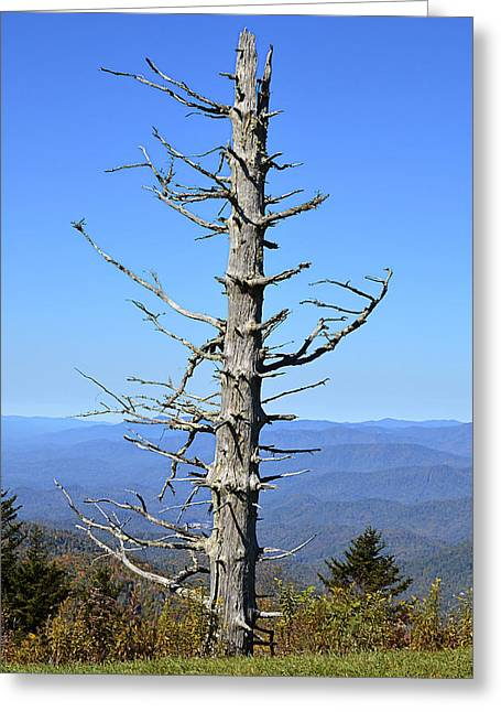 Dead Tree Greeting Card by Susan Leggett