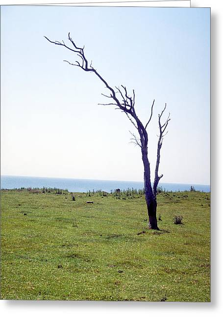 Dead Tree Greeting Card by Victor De Schwanberg