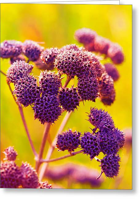 Dead Weed On Lime Greeting Card by Bill Tiepelman
