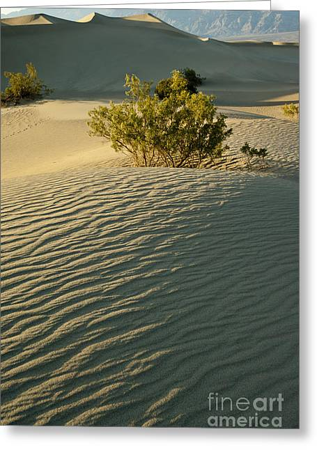 Death Valley 10 Greeting Card
