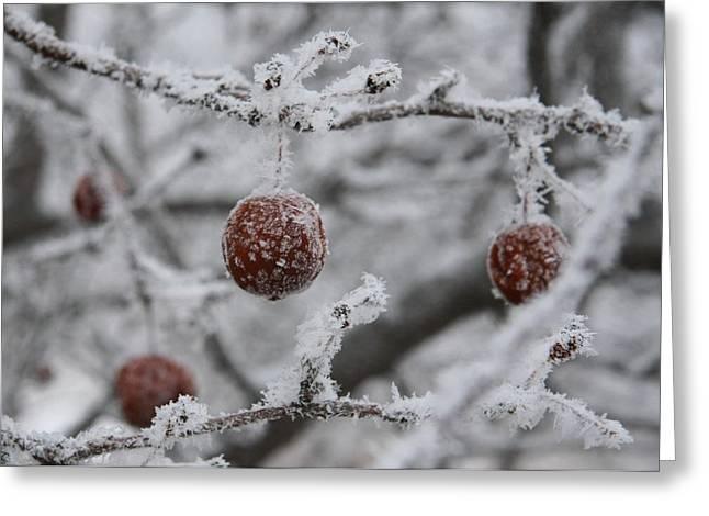 December Apple Tree Greeting Card