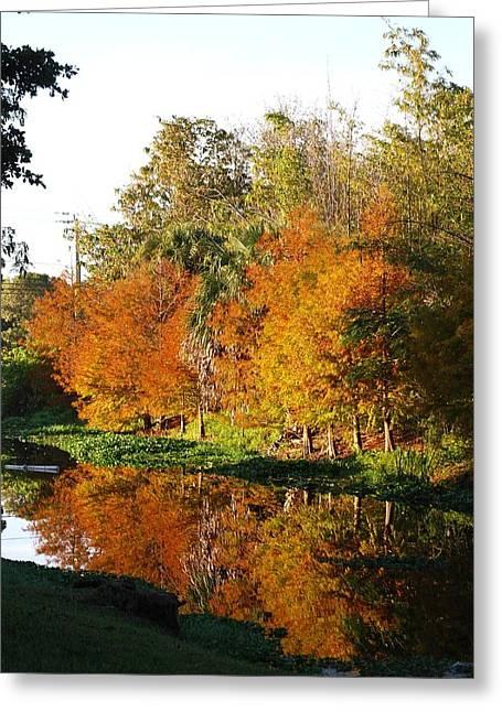 December Morn On Deerfield Creek Greeting Card