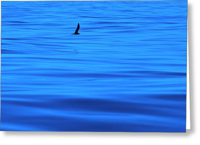 Greeting Card featuring the photograph Deep Blue Sea by Odille Esmonde-Morgan