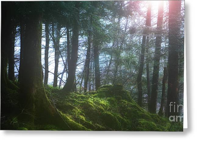 Deep Forest Greeting Card