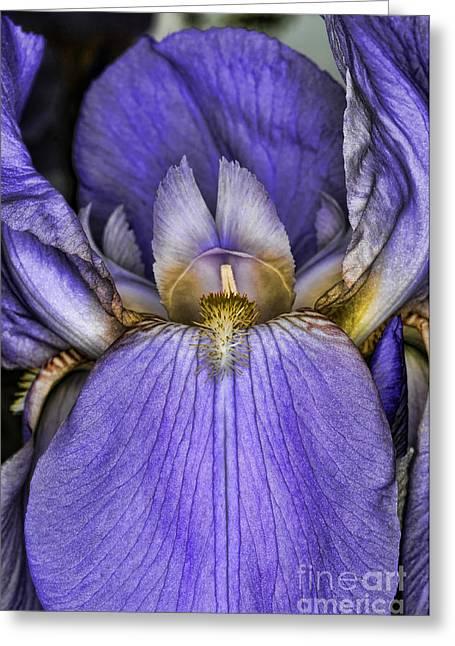 Deep Purple Greeting Card by Paul Ward