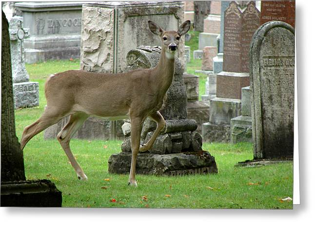 Deer Among The Headstones Greeting Card by Bruce Ritchie