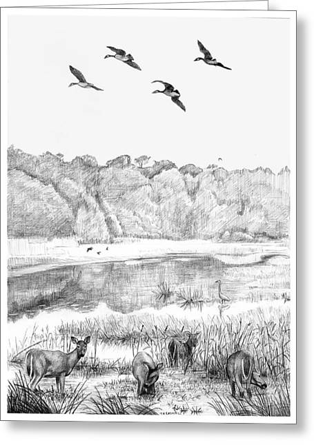 Deer And Geese - Lake Mattamuskeet Greeting Card by Tim Treadwell