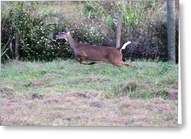 Greeting Card featuring the photograph Deer At Viera by Jeanne Andrews