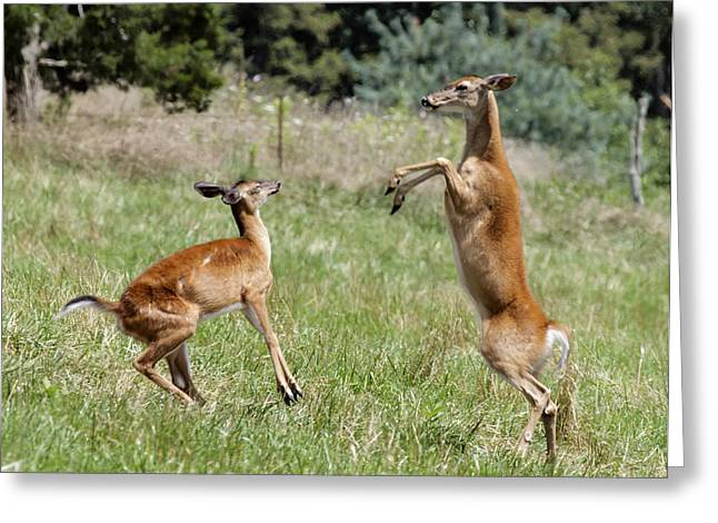 Deer Greeting Card by David Lester