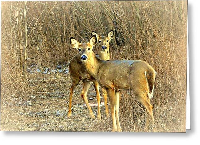 Deer Duo Greeting Card by Marty Koch