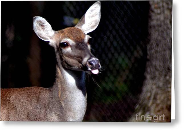 Deer Giving Raspberries Greeting Card by Eva Thomas