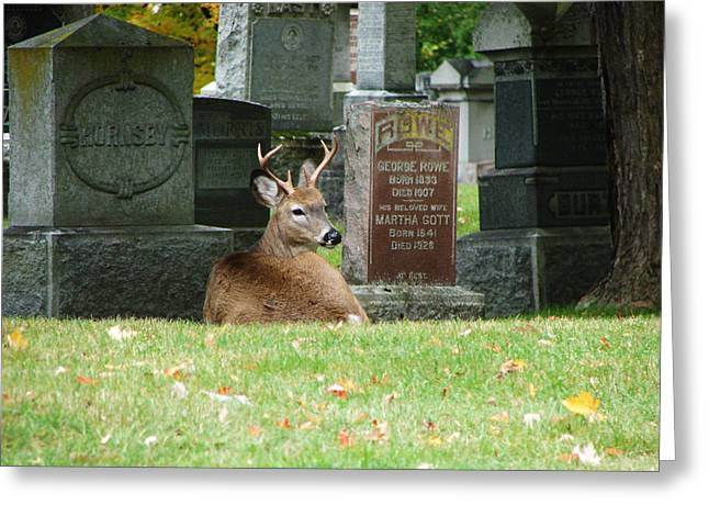 Deer In Cemetery Greeting Card by Bruce Ritchie