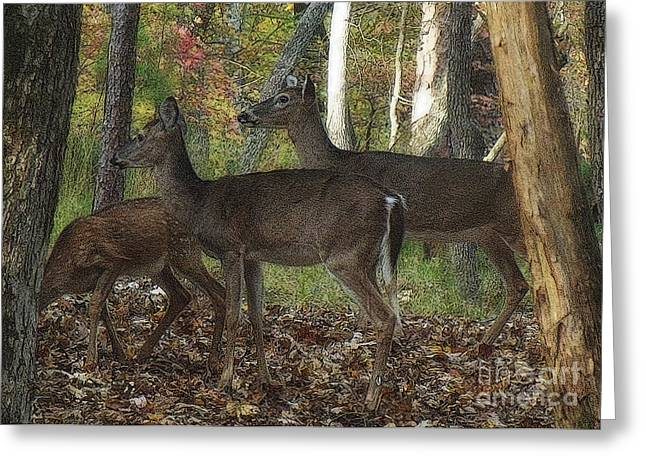 Greeting Card featuring the photograph Deer In Forest by Lydia Holly