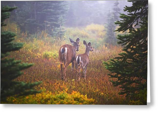 Deer In The Fog In Paradise Park In Mt Greeting Card
