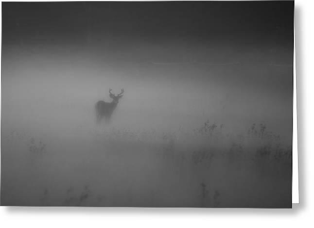 Deer In The Fog Greeting Card by Nicholas Palmieri