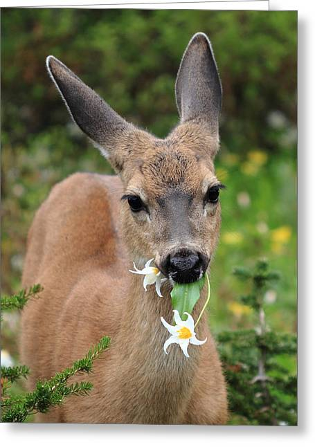 Deer In The Wild Flowers Greeting Card by Pierre Leclerc Photography