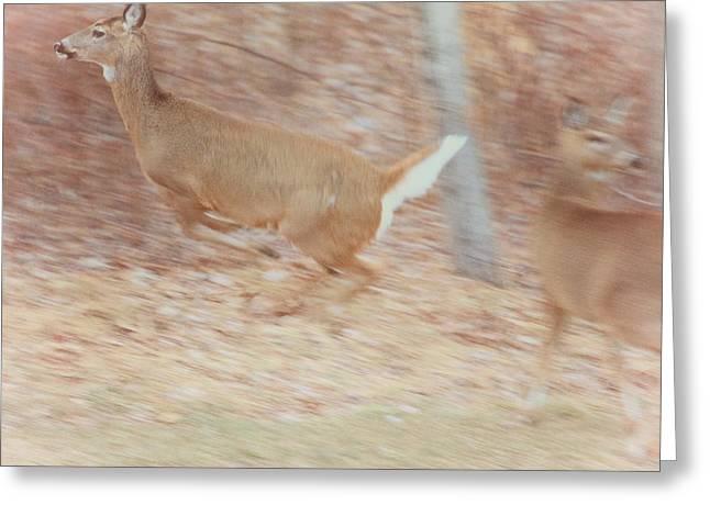 Deer On The Run Greeting Card by Karol Livote