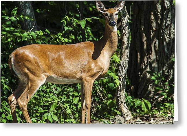 Deer Surprise Greeting Card by Edward Peterson