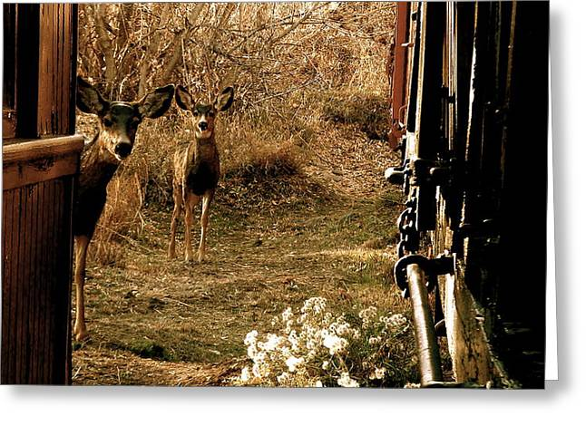 Deer Train Yard In Golden Greeting Card by Travis Burns