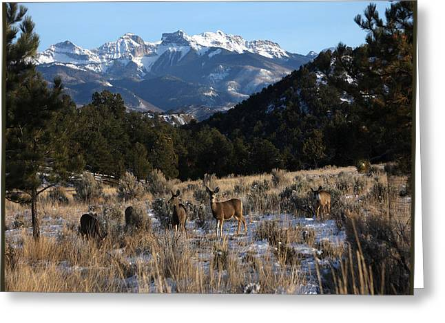 Greeting Card featuring the photograph Deer With Cimmaron Mountain Backdrop by Marta Alfred