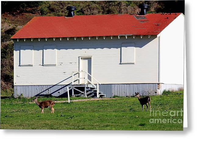 Deers At The Old Presidio In The Bay Area Marin Headlands . 40d4237 Greeting Card by Wingsdomain Art and Photography