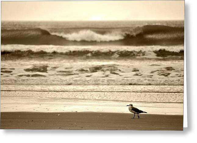 Greeting Card featuring the photograph Deliberate Solitude by Kelly Nowak