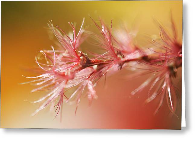 Delicacy. Natural Wonders. Macro Greeting Card by Jenny Rainbow