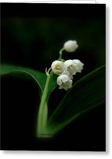 Greeting Card featuring the photograph Delicate Beauty by Marija Djedovic