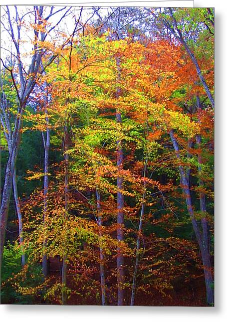Delicate Colors Greeting Card by Vijay Sharon Govender