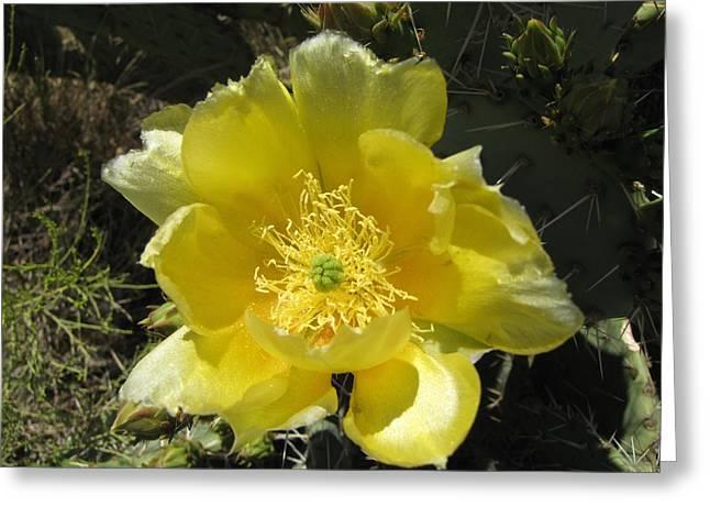 Delicate Desert Flower Greeting Card by FeVa  Fotos