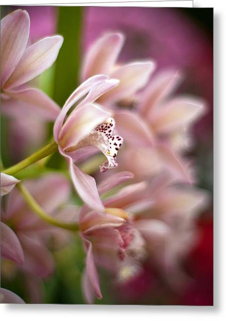 Delicate Garden Greeting Card by Mike Reid