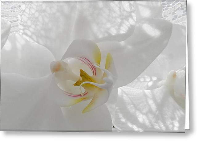 Delicate... Greeting Card by Halina Nechyporuk