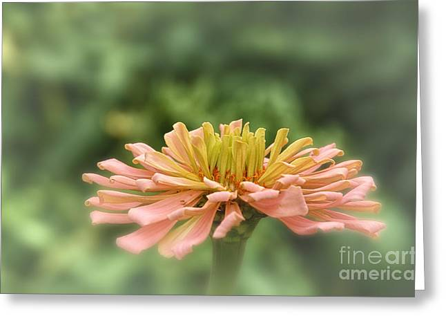 Delicate Pedals Greeting Card by Tamera James
