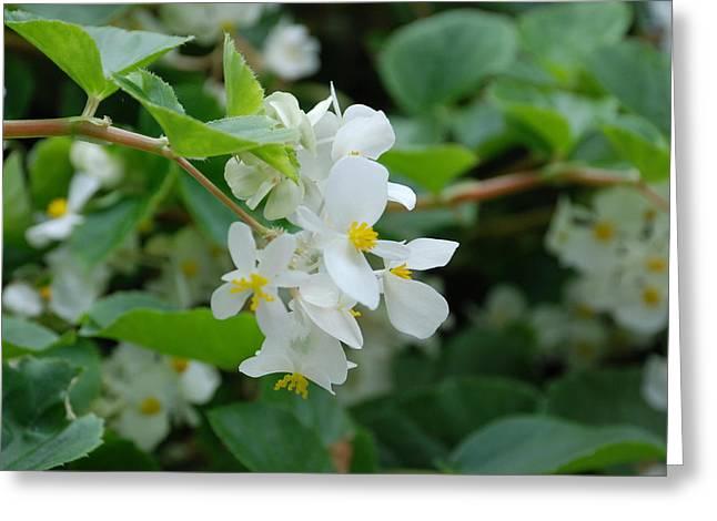 Delicate White Flower Greeting Card by Jennifer Ancker