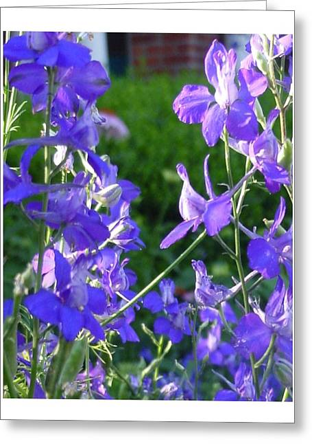 Greeting Card featuring the photograph Delicately Blue by Frank Wickham