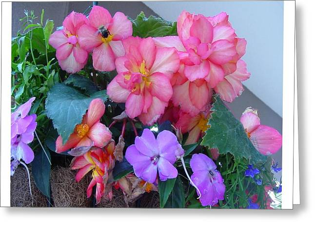 Greeting Card featuring the photograph Delightful Potpourri Of Pastels by Frank Wickham