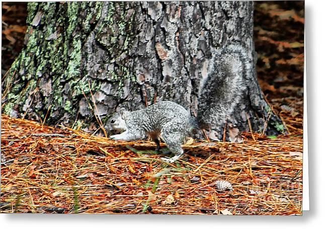 Delmarva Fox Squirrel Greeting Card