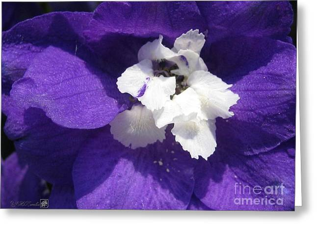 Delphinium Named Blue With White Bee Greeting Card by J McCombie