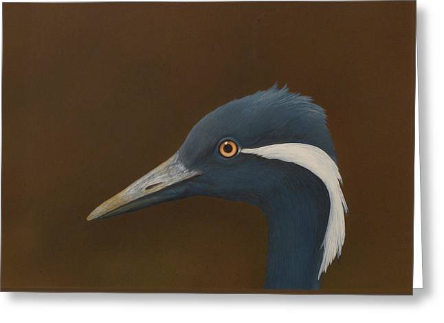 Demoiselle Crane Greeting Card by Norm Holmberg
