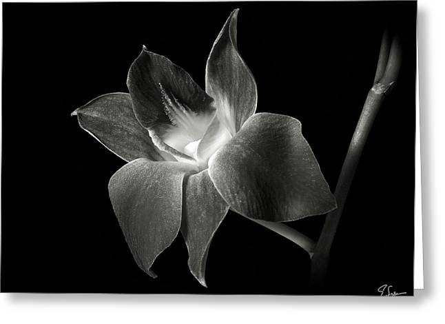 Dendrobium Orchid In Black And White Greeting Card by Endre Balogh