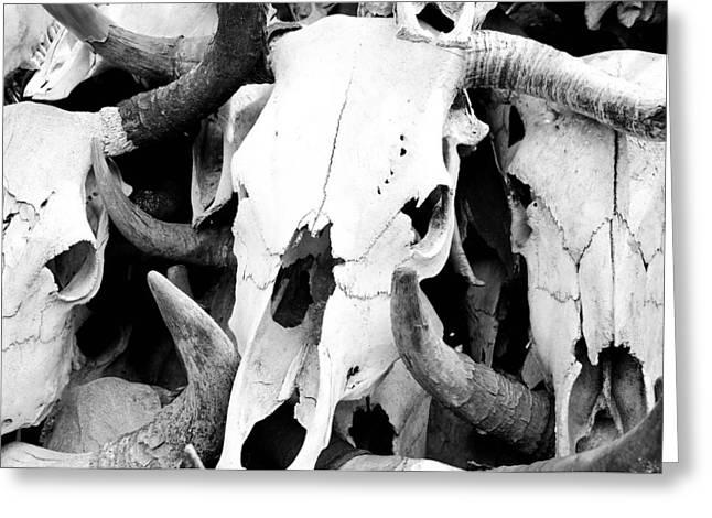 Desert Bones Greeting Card by Margaret Pitcher