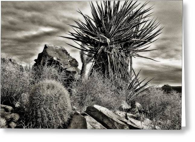 Desert Garden Greeting Card by Thomas Born
