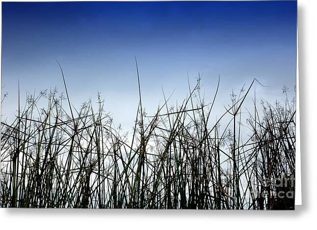 Desert Grass Greeting Card by Antoni Halim